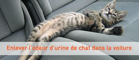 Comment enlever l'odeur d'urine de chat dans sa voiture ?