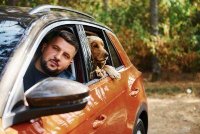 Conseils pour transporter son chien en voiture en toute sécurité
